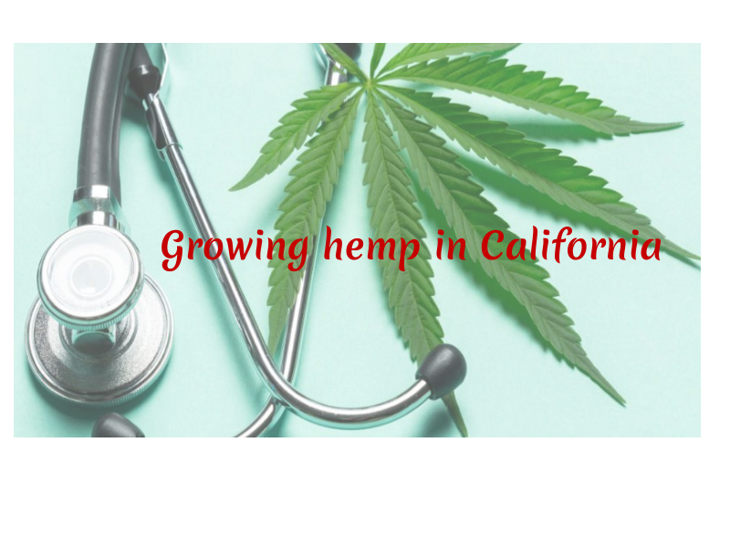 Growing hemp in California