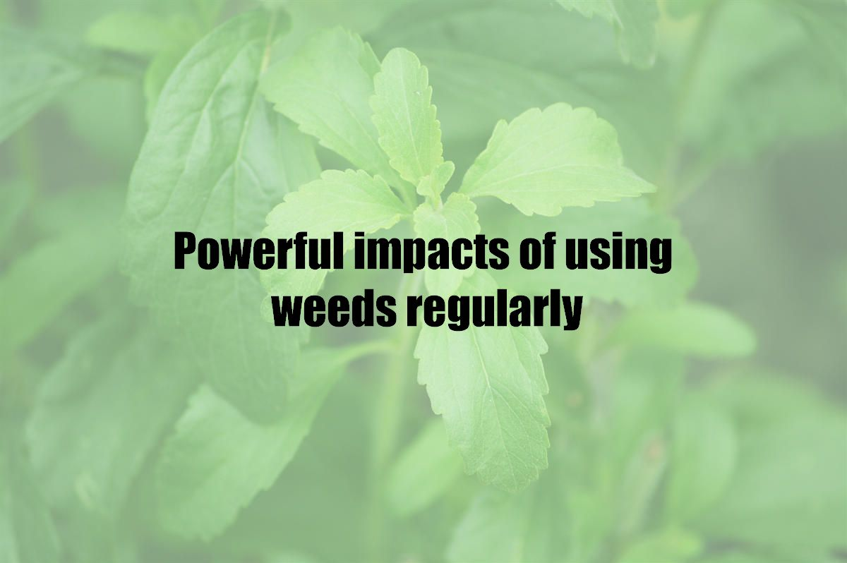 Powerful impacts of using weeds regularly
